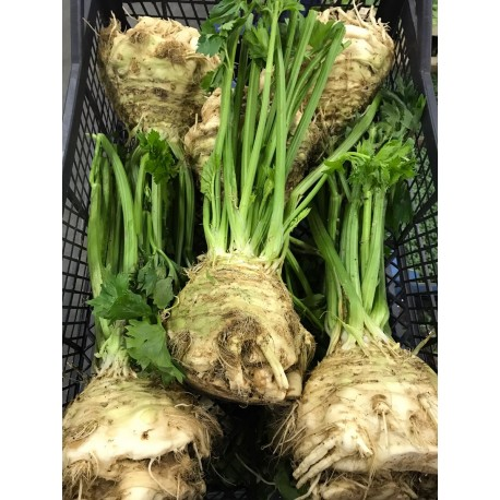 Local celeriac