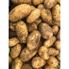 Egyptian new potatoes 500 g