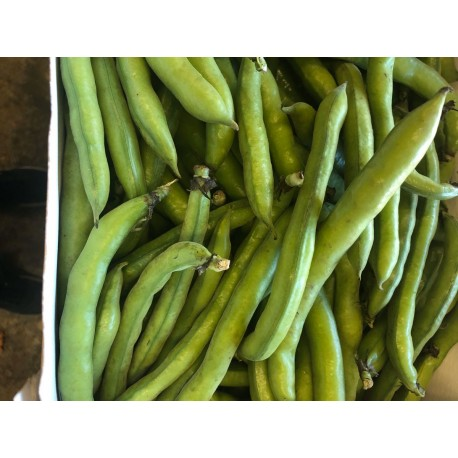 Broad beans 500 g