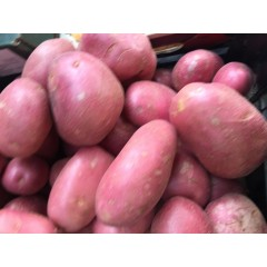 Romana red potatoes