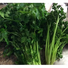 Flat leaf , curly parsley. 1/2lb