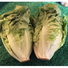 Spanish, little gem lettuce.pkt of 2.