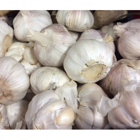 Loose garlic bulbs