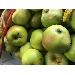 Bramley Apple each