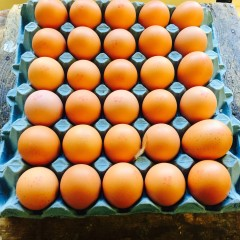 Local large free range eggs